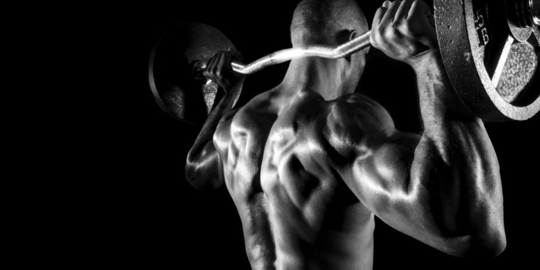 Training: Back Muscles - ZoneFitness